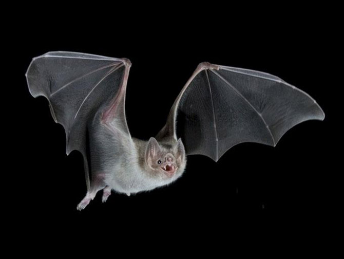 INTERNATIONAL DAY OF BATS