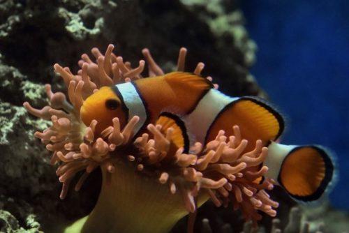 Aquarium Pola